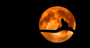 image of cat on tree in front of full moon